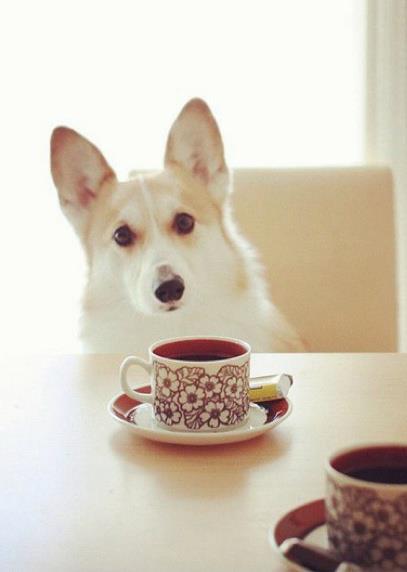 la cafea